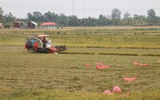 稲の消費を補助するアンザン省