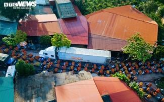 Ấn tượng hàng dài xe chở vải nối đuôi nhau đến điểm thu mua ở Bắc Giang
