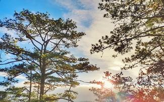 Khám vườn quốc gia Bidoup - Núi Bà ở cao nguyên Lâm Viên