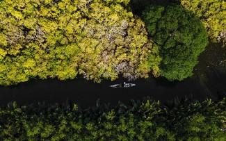 Vẻ đẹp rừng ngập mặn Rú Chá ở Huế mùa thay lá