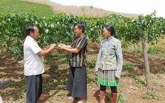 Erneuerungen im Dorf Phieng Cai