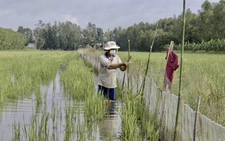 Saison der Aquakultur in Hau Giang