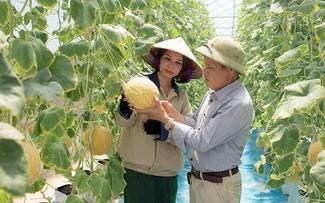 Provinsi Hung Yen Fokus pada Restrukturisasi Produksi Pertanian