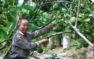 Ông Ba Liêm – Người Đảng với nhiều hướng đi mới trong lao động, sản xuất