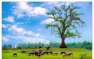 Hát lên Việt Nam - vẻ đẹp của đất nước đang mỗi ngày vượt qua gian khó