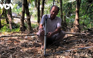 Ca Mau farmer successfully grows bamboo shoots in saline water area