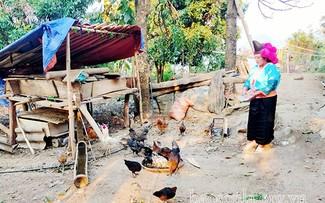 Hmong woman escapes poverty through husbandry