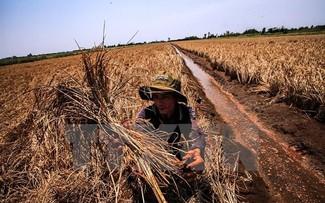 Tăng cường hợp tác chống biển đổi khí hậu ở Đồng bằng sông Cửu Long