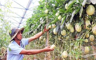 Nông dân Việt cần chủ động hơn để thích ứng với biến đổi khí hậu