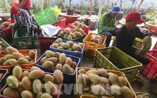 Doanh nghiệp rau quả tận dụng ưu đãi từ các hiệp định thương mại
