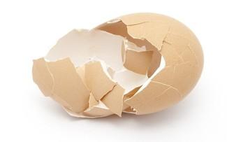 Nhà khoa học Việt Nam tạo vật liệu làm xương nhân tạo từ vỏ trứng