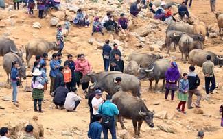 Канкау – крупнейший буйволиный базар на северо-западе Вьетнама