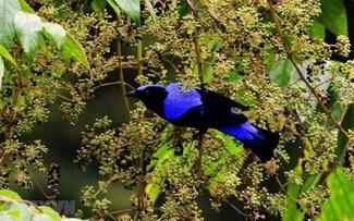 Два биосферных заповедника Вьетнама признаны ЮНЕСКО