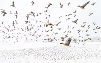 ภาพถ่ายบึงน้ำเค็ม ตามยาง ได้รับรางวัลที่ 1 ในการประกวดภาพถ่ายทางอากาศระหว่างประเทศ
