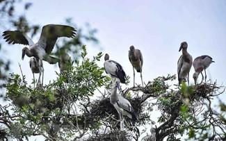 อุทยานแห่งชาติ Tram Chim – เขต Ramsar แห่งที่ 2,000 ของโลก