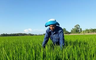 Sóc Trăng ứng phó với tình trạng mặn xâm nhập để bảo vệ vụ lúa Đông Xuân