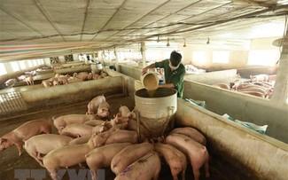Triển vọng của ngành chăn nuôi Việt Nam rất tích cực