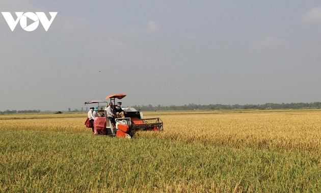 El arroz vietnamita reafirma su marca en los mercados más exigentes