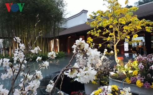 La fête des fleurs de cerisier et d'abricotier Yên Tu-Ha Long 2019