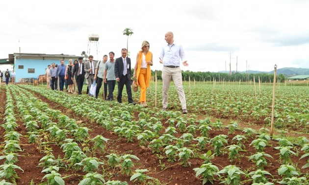 Vietnam, Netherlands to cooperate on assuring sustainable agriculture and food security