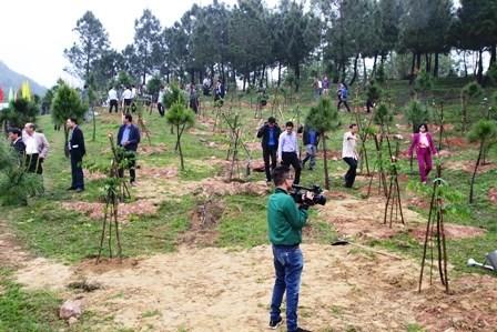 Die Provinz Thua Thien Hue will in diesem Jahr alle Kriterien zum Waldschutz erfüllen