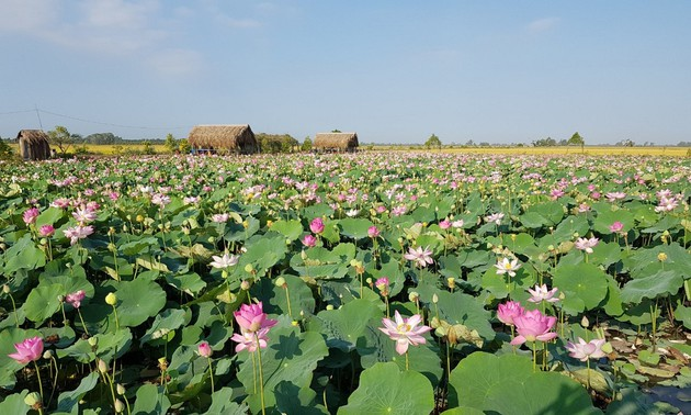 Wertsteigerung der Produkte aus Lotus in Dong Thap