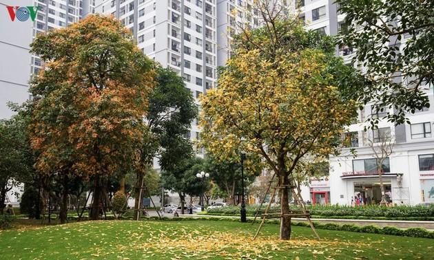 Hanoï, quand les feuilles changent de couleur