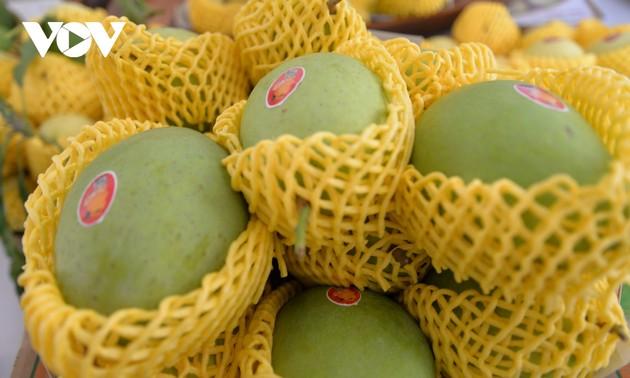 Produksi Buah Mangga Berstandar dan Berkualitas  Global Untuk Diekspor