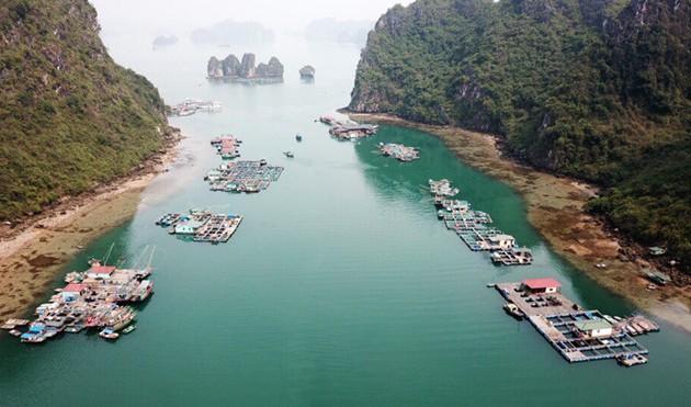 Les  nouvelles sirènes de la baie d'Halong