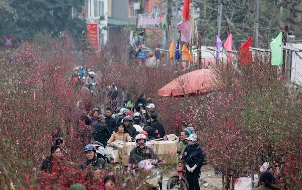 Flower villages in Hanoi bustling for Tet