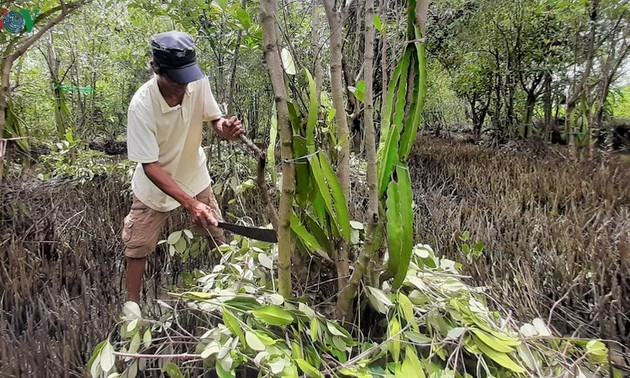 """Pola 'Pohon Buah Naga Memeluk Pohon Api-Api' yang Khas Provinsi Ca Mau"""""""