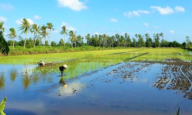 Provinsi Ca Mau Kembangkan Brand Padi Bersih