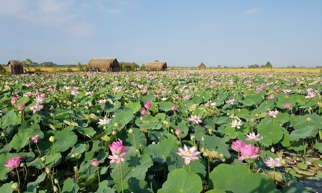 Peningkatan Nilai Produk dari Teratai di Daerah Dong Thap