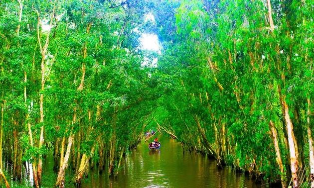 Keindahaan Hutan Bakau Tra Su di Provinsi An Giang