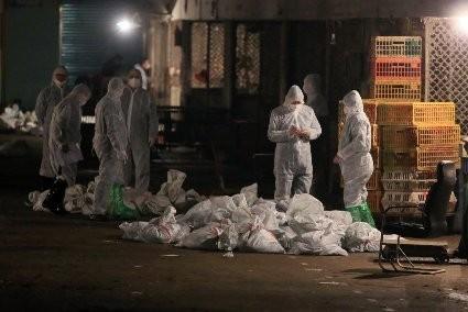 Zwei neue Infektionen mit Vogelgrippe-Virus H7N9 in Shanghai entdeckt