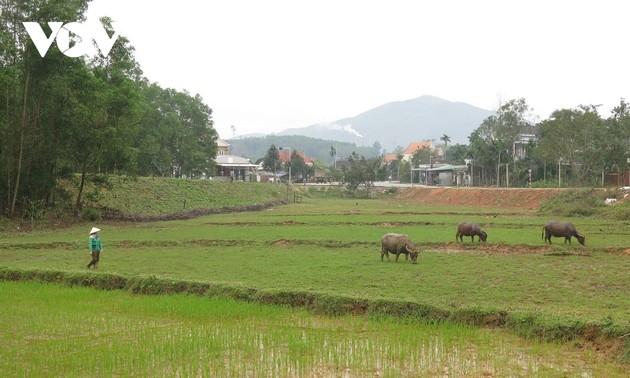 Volksgruppe Hre erzählt Geschichte über Armutsminderung dank Wasserbüffel