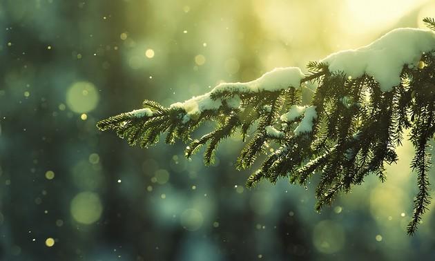 "Tuan Jeon의 음악편지, ""12월의 계획"""