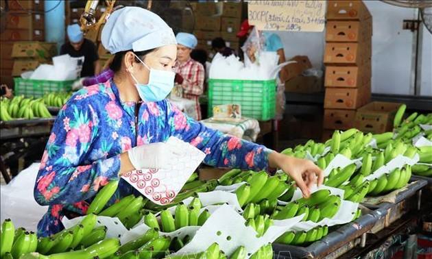 신선한 과일 및 가공 과일 제품 한국으로 수출 촉진