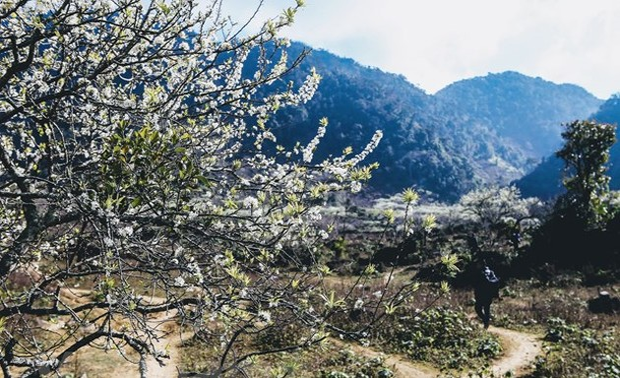 西北木州高原