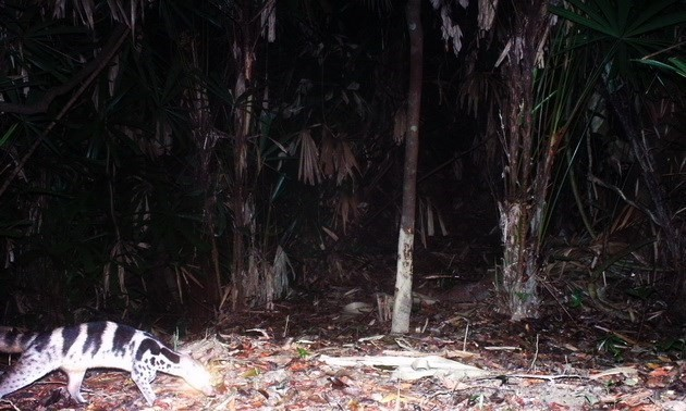Many globally endangered species discovered in Phong Dien Nature Reserve