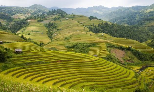 Yen Bai province, an alluring destination in the northwest