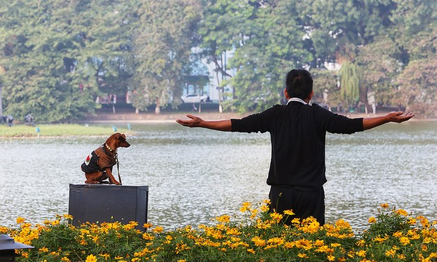 Walking dogs might be banned from Hanoi's walking streets