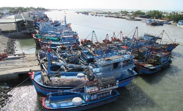 Vietnam makes progress in fight against IUU fishing