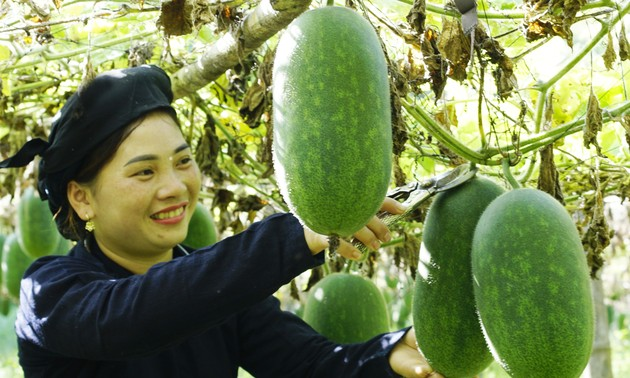 New-style cooperatives in Bac Can give local agro-forestry a major boost