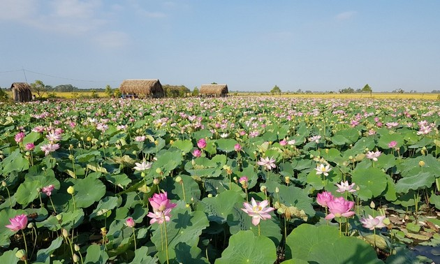 Dong Thap improves its lotus products