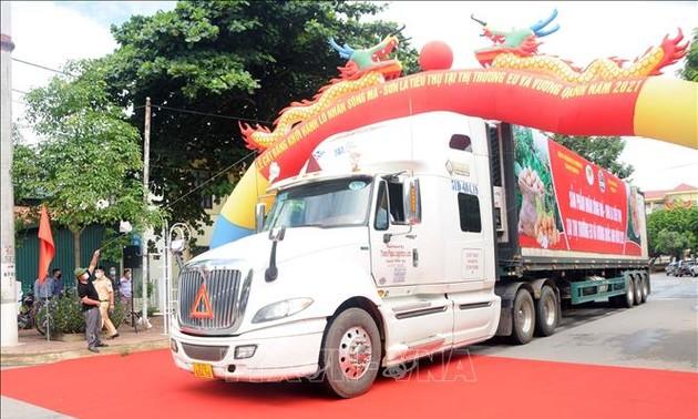 Son La province exports longan to EU, UK