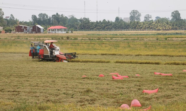 Farmers, enterprises in An Giang province connected for rice sales