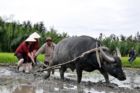 A Hôi An: Des touristes se metttent dans la peau de paysans vietnamiens