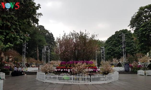Festival Bunga Sakura Jepang-Ha Noi 2019