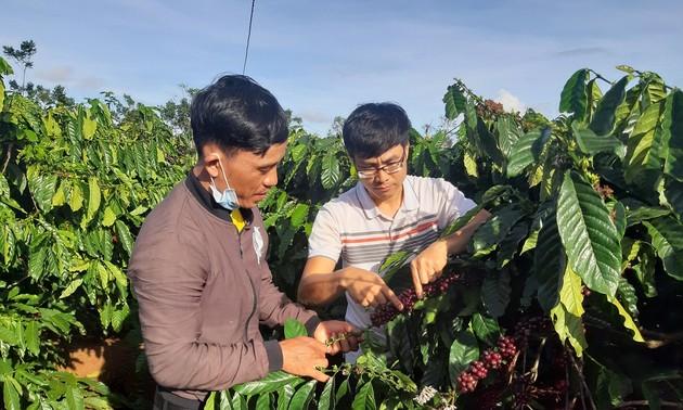 Pobladores de la etnia Bahnar se suman al nuevo modelo de producción decafé